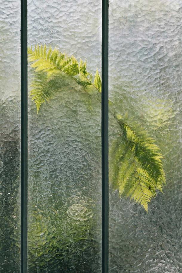 Фотографии растений как живописные полотна