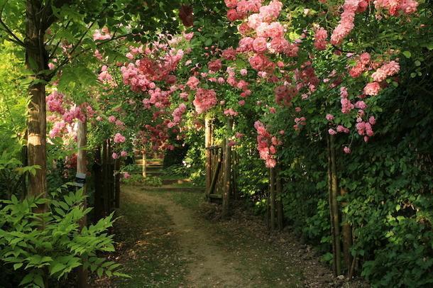 Частный сад.