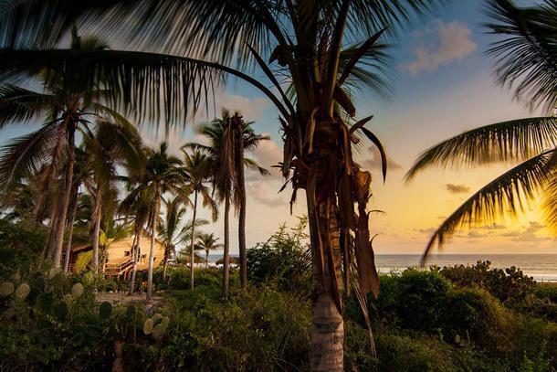 #отпускпообмену: домик на дереве на берегу Тихого океана