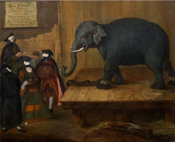 Пьетро Фалька, прозванный Лонги. Слон.