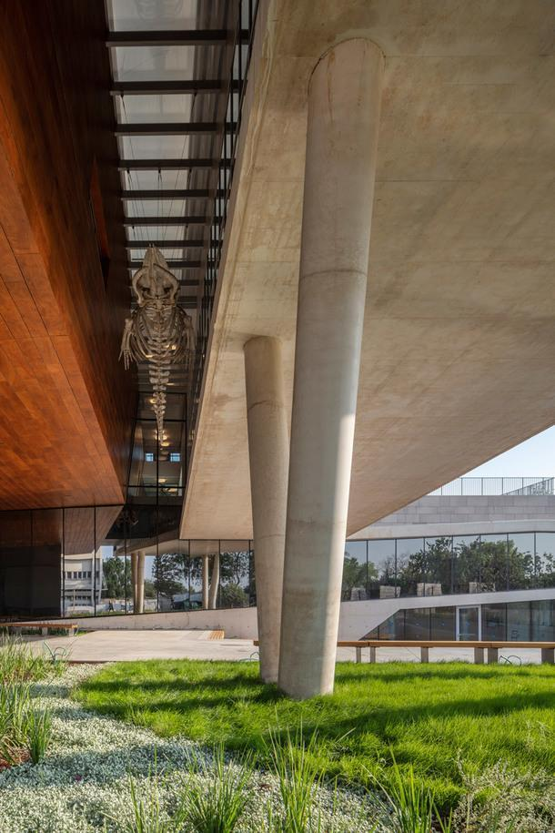 Музей естественной истории в Тель-Авиве